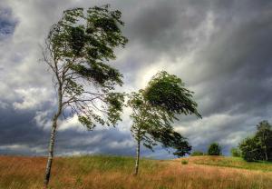 Почему воет ветер в трубах