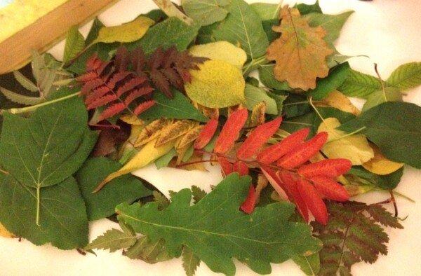 Как сушить листья для поделок
