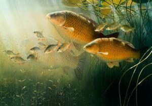 Как зимуют рыбы