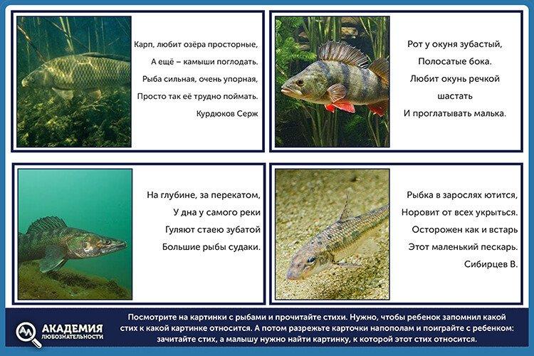 Стихотворения про рыб для детей