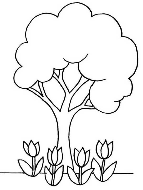 Раскраска для детей 3-4 лет Дерево