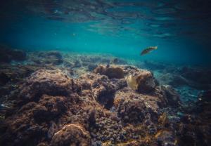 Что находится на дне океана. Познавательный рассказ для детей